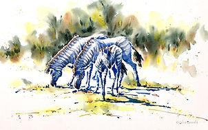 Julia Cassels - Wildlife Artist, 'Zebras',  Watercolour  33 x 50cm- Framed  £825.00