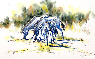 Julia Cassels - Wildlife Artist, 'Zebras',  Watercolour  33 x 50cm - Framed  £825.00