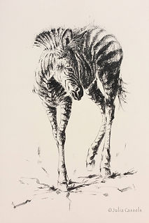 Julia Cassels - Wildlife Artist, 'Zebra Foal', Charcoal on board, 122 x 82cm - Unframed  £995.00