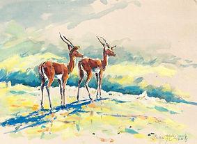 Julia Cassels - Wildlife Artist, 'Impala, Morning Light' - Oil on linen covered board  30 x 40cm - Framed  £950.00