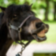 Adopt a Pony - MO. Broadlands RDA, Medst