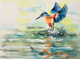 Julia Cassels - Wildlife Artist, 'Kingfisher' - Watercolour  37 x 52cm - Framed  £895.00