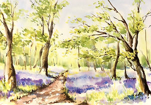 Julia Cassels - Wildlife Artist, 'Bluebell Wood' - Watercolour  38 x 52cm - Framed  £850.00