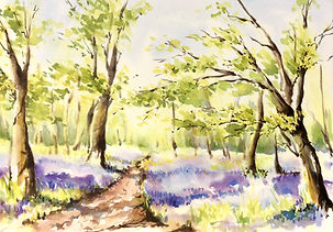 Julia Cassels - Wildlife Artist, 'Bluebell Wood' - Watercolour  38 x 52cm - Framed  £850.00