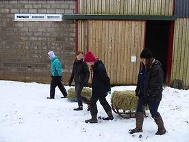 Donate a Bale of Hay, Broadlands RDA, Medstead