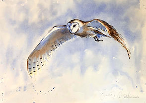 Julia Cassels - Wildlife Artist, 'Silent in Flight',  Watercolour,  50 x 70cm - Framed  £1,150.00