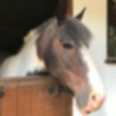 Adopt a Pony - MILLIE. Broadlands RDA, Medstead