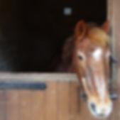 Broadlands RDA, Medstead Ponies  - Merli