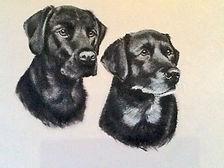 Pet portrait artist Susie de Boinville, Hampshire