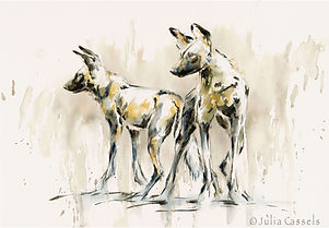 Julia Cassels - Wildlife Artist, 'Wild Dog 2 - Watercolour  50 x 71cm - Unframed  £950.00