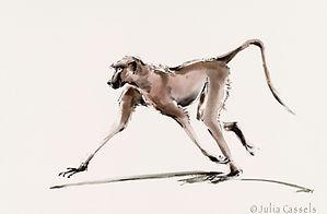 Julia Cassels - Wildlife Artist, 'Swagger' - Watercolour  43 x 51cm - Unframed  £325.00