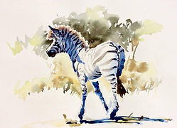Julia Cassels- Wildlife Artist - 'Zebra Light', Watercolour,  30 x 40cm, SOLD