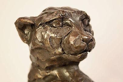 Tarangire Cheetah head (detail 2) reduce