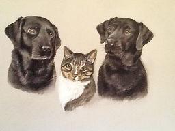 Pet portrait artist Susie de Boinville