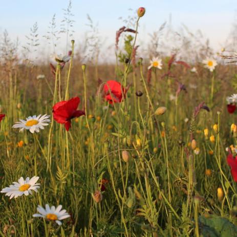 Watchtree Meadows.jpg