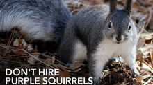 Don't Hire Purple Squirrels