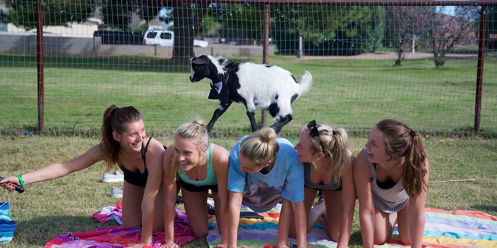 Upstate Goat Yoga, Appalachian Hike and Exploring Beacon!