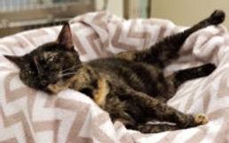 tucson-cat-veterinarian.jpg