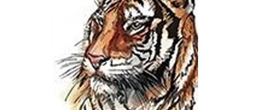 Tiger colored temp tattoo | נמר