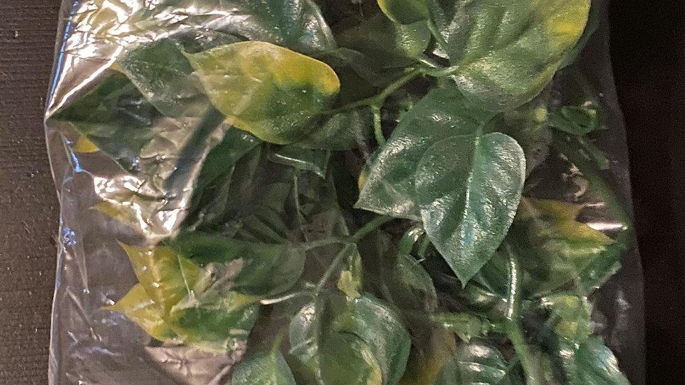 Exo terra amapallo plant small
