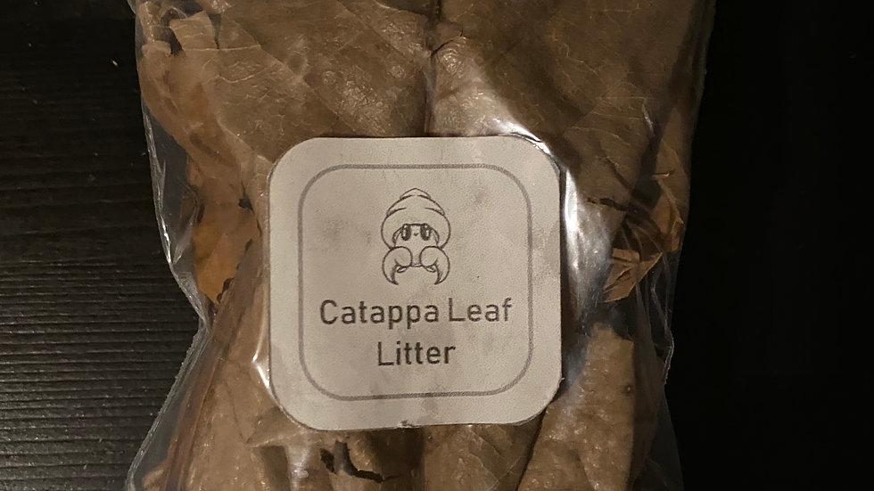 12g Small bag of catappa leaf litter