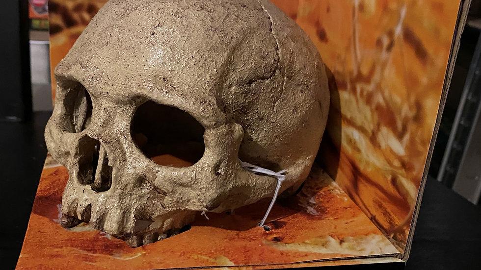 Exo Terra skull