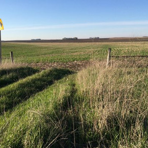 Cover crop project will lead to cleaner water