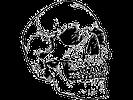 skull 2.webp