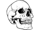 skull 2.png