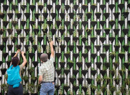 Horta vertical: a solução para os pequenos espaços