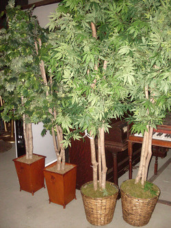 7ft Potted Trees