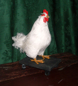 Hen that lays Gold Eggs