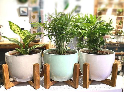 "6"" Ceramic planter + wooden stand"