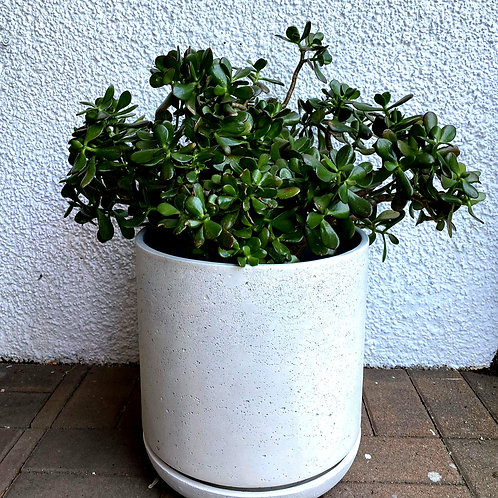 """14"""" Cement Planter with saucer"""