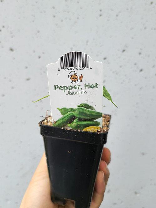 "2"" jalapeño pepper 🌶"