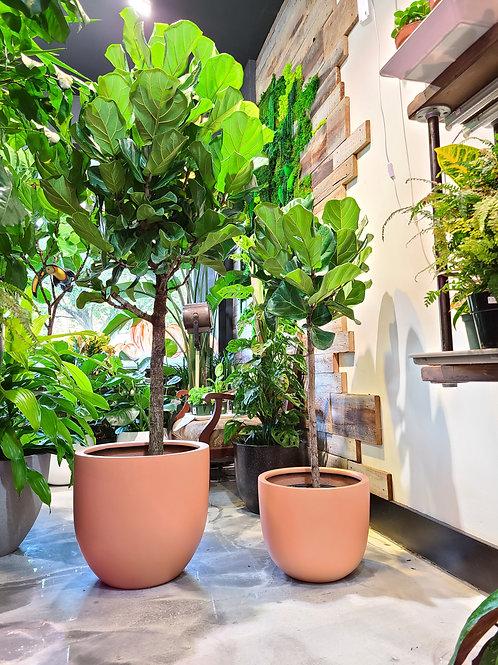 "16"" Sunset fiberglass planter"