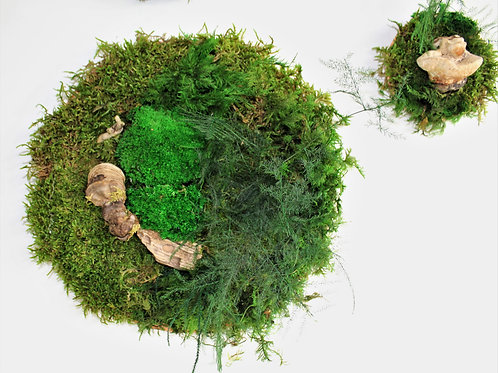 Preserved moss rounds