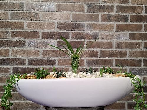 Large potted cacti arrangement
