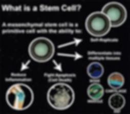 what is a stem cell_.jpg