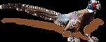 pheasant-.png