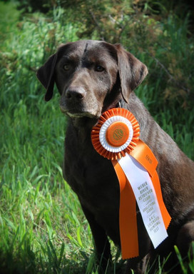 Kate with an AKC SH pass