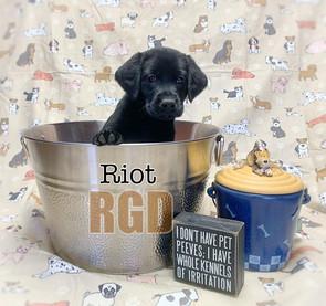 Riot at 6 weeks
