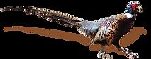 Pheasant (4).png