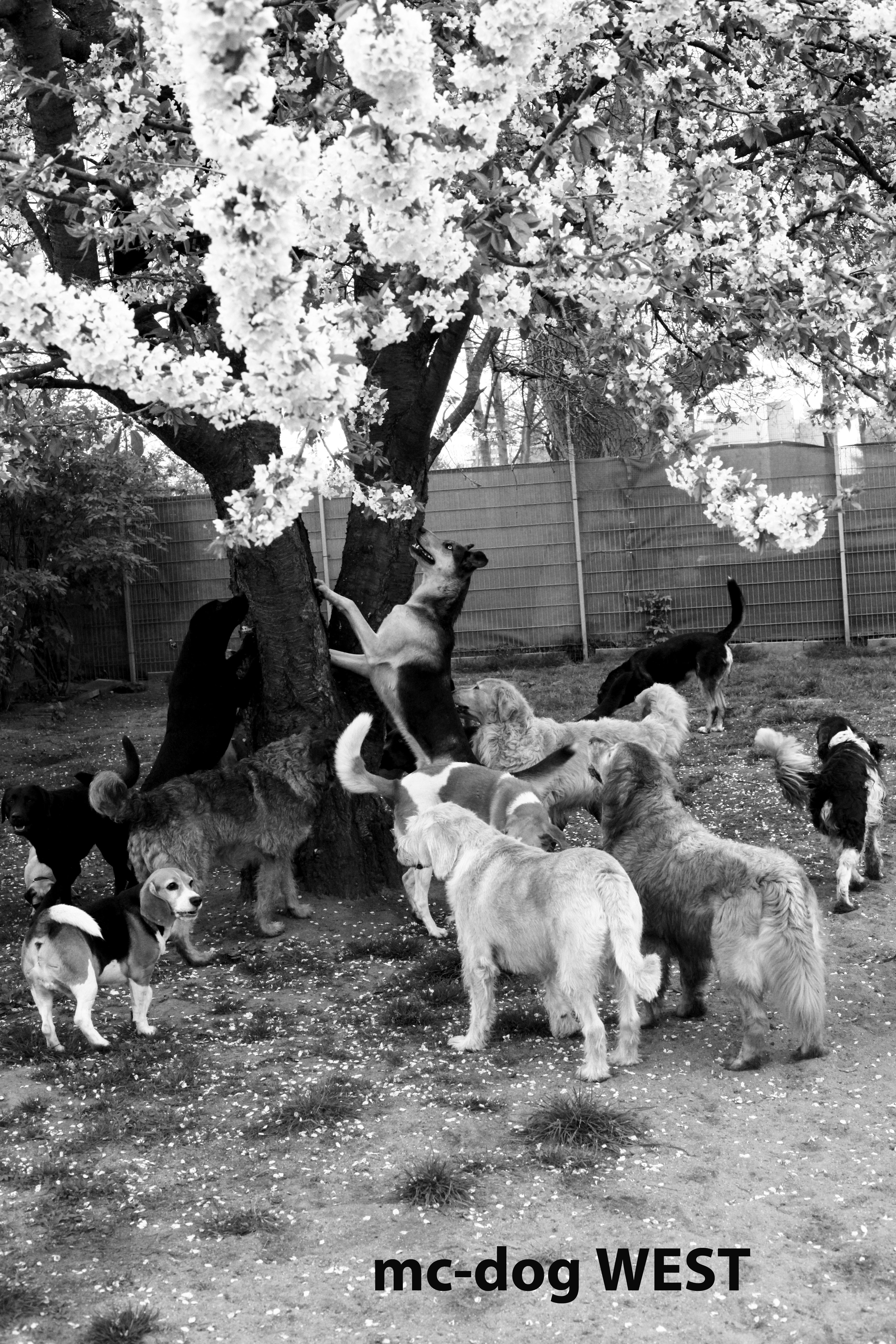 Hundetagesstätte Köln