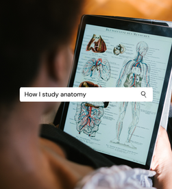 How I study anatomy (+ some tips for lockdown)