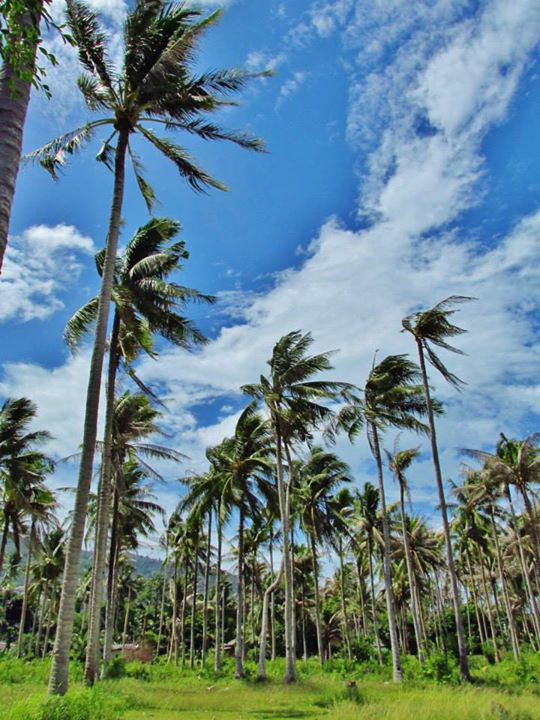 Southeast Asia Itineraries - Southeast Asia Tours - Always expect palm trees in your backyard