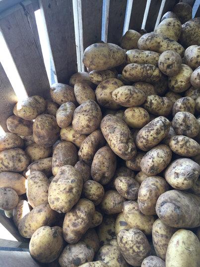 poplarbluff organics.JPG