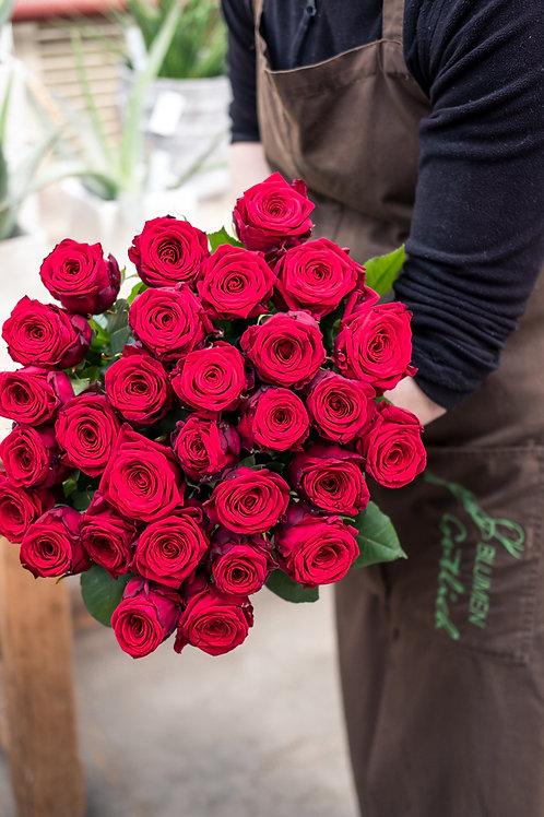 Rosen in Rot
