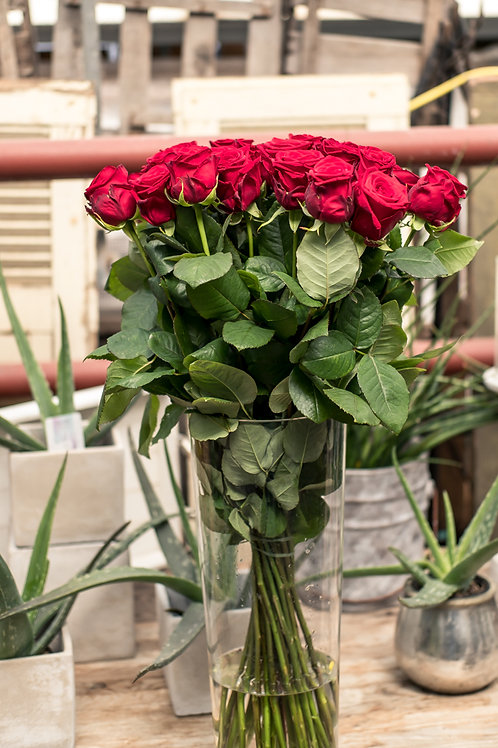 Rosen in Rot (10 Stk.)
