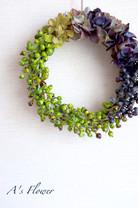ベリー紫陽花1.JPG